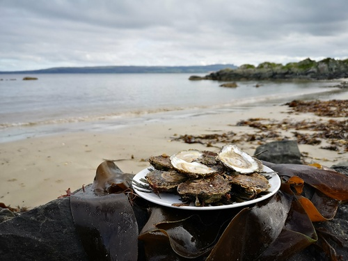 Dégustation d''huîtres